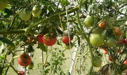 Специалисты рекомендуют ижевчанам менять место посадки растений минимум раз в год