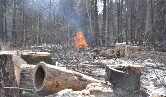 В Ижевске в парке Кирова вырубают и сжигают деревья