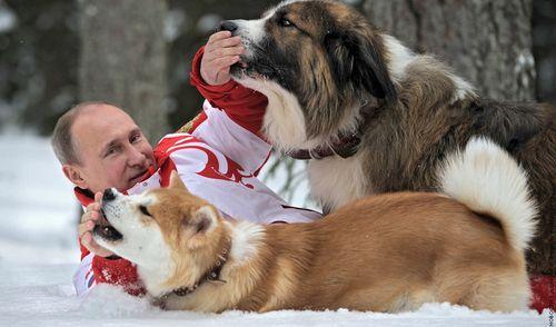 Фотофакт: Путин повалялся в снегу вместе с собаками