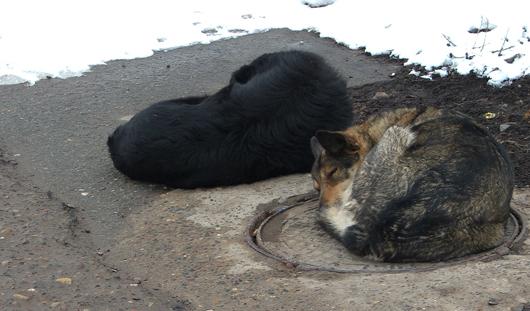 Жители Ижевска выступили против убийства бездомных животных