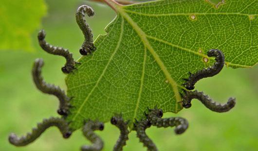 Вредителям бой! Советы ижевчанам, как избавиться от вредителей и вылечить болезни растений уже сейчас