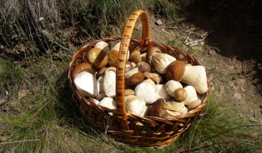 Употребление белых грибов снижает вес