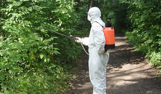 За первые дни мая в Ижевске обработали от клещей 87 гектаров леса