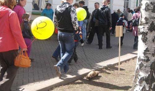 Фотофакт: в день Победы по улицам Ижевска разгуливают хорьки