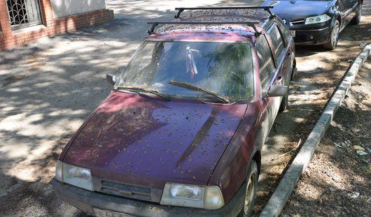 Липкая напасть: как ижевчанам спасти свое авто от тополиных чешуек