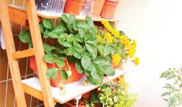 «Грядки» на балконе: какие сорта огурцов и помидоров подходят для этого