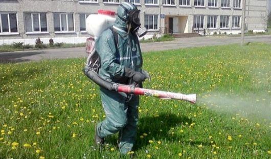 В Ижевске от клещей обработали 10 детских садов