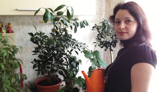 Тропики в квартире: советы ижевчанам, как вырастить дома экзотику