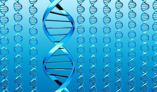Успехи в школе зависят от генетической предрасположенности к учебе