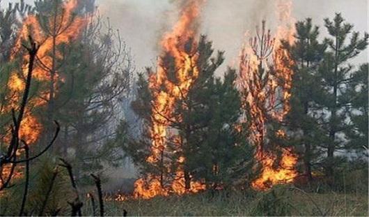 Россиян будут штрафовать за прогулки по лесу в пожароопасный период