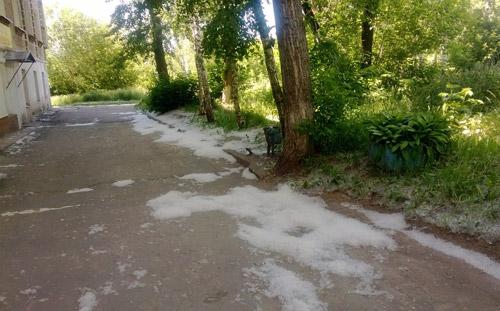 Фотофакт: улицы Ижевска погрязли в тополином «пухо-снеге»