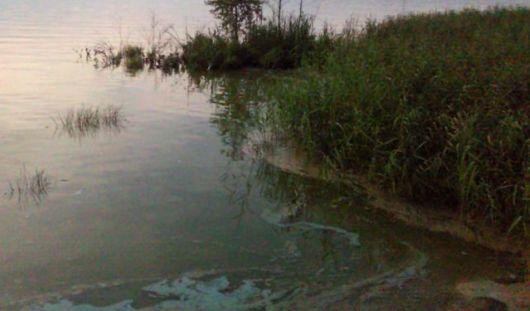 Вода в Ижевском пруду может зацвести уже к концу июля