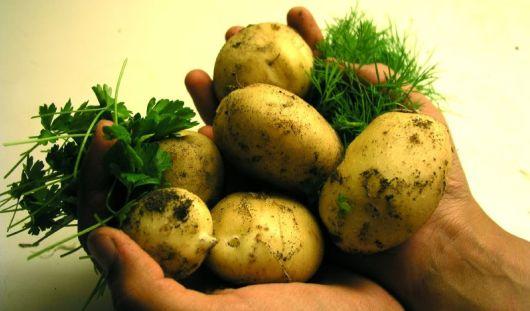 Картошка в Удмуртии подорожала за месяц в полтора раза