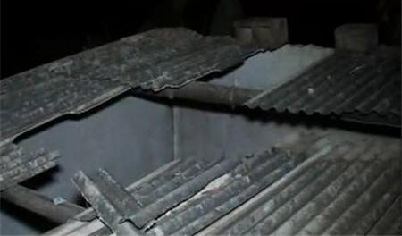 Упавшая с крыши корова насмерть раздавила бразильца