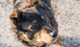 Где в Ижевске можно усыпить домашних животных