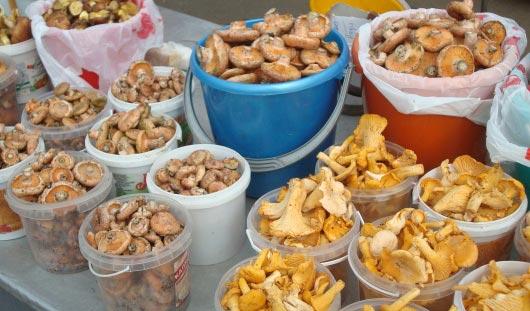 Грибной сезон: сколько стоит запастись опятами и маслятами на зиму в Ижевске?