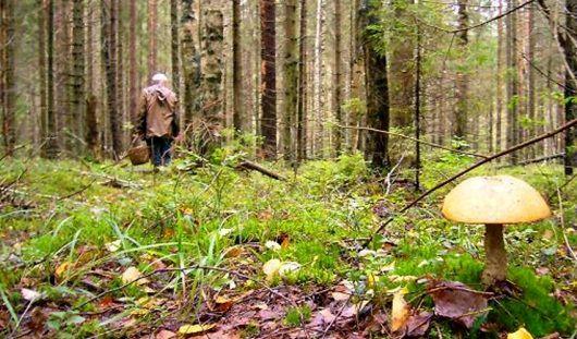 Ижевчанин 4 суток блуждал без воды и еды по удмуртским лесам