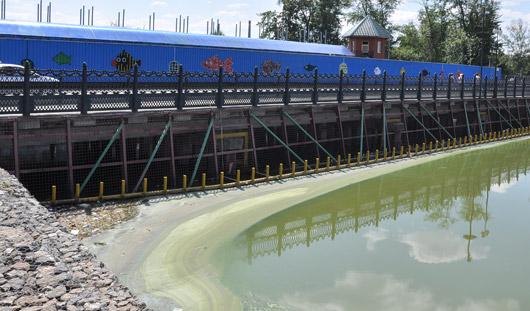 Количество сине-зелёных водорослей в Ижевском пруду сократилось почти в три раза