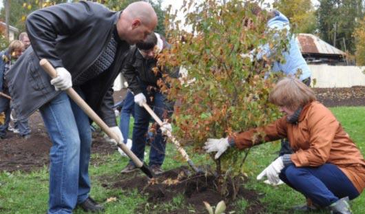 Больше 100 молодых деревьев посадили в «Вишневом» сквере Ижевска