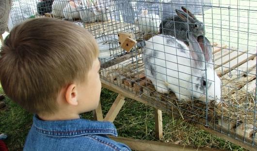 На сельхозярмарке в Ижевске можно будет купить кроликов и речную рыбу