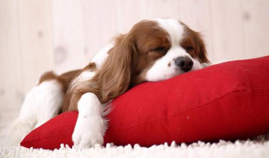 Ученые выяснили, что много спать вредно для здоровья