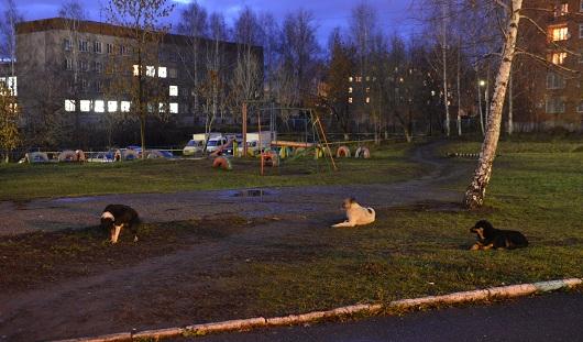 Собаку, которая покусала школьников в Ижевске, усыпили