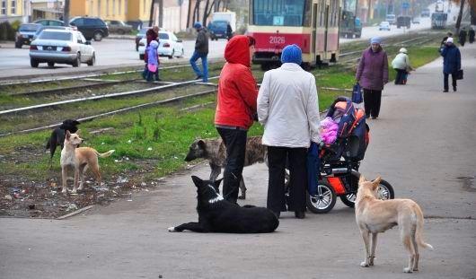 В Управлении ветеринарии не нашлось 640 тысяч на отлов бродячих собак в Ижевске