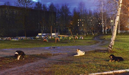 Собаку, искусавшую школьников на Буммаше в Ижевске, усыпили