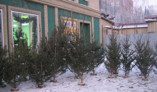 Елочные базары откроются в Ижевске в ближайшие выходные