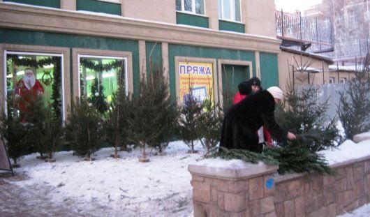 Количество елочных базаров в Ижевске увеличилось до 19