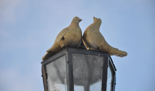 Фотофакт: скульптура голубей появилась на набережной Ижевска