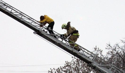 В Ижевске из горящей 5-этажки эвакуировали жителей и кошку Соню