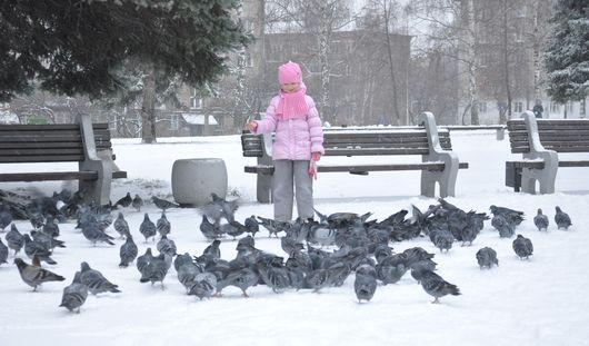 Потепление и метель придут в Ижевск в выходные