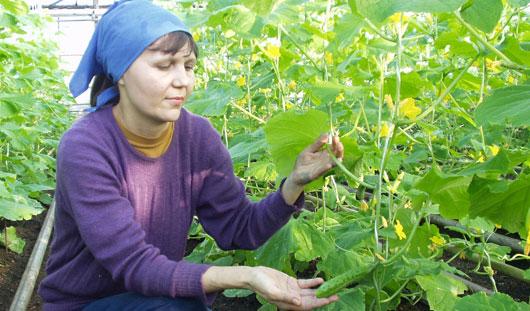 Лунный календарь посева и сбора урожая на 2014 год