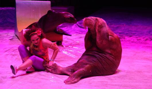 Новая программа в цирке Ижевска: морж качает пресс, а дрессировщик кусает крокодила