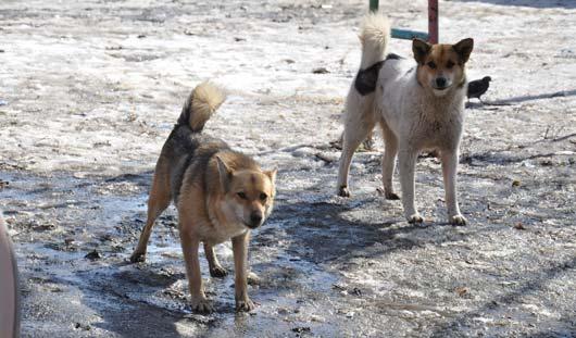 Ижевчане ищут владельца собак, которые напали на маму с 4-летним сыном