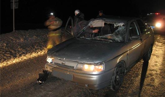 В Удмуртии из-за лосей, выбежавших на дорогу, в ДТП пострадали 2 водителя