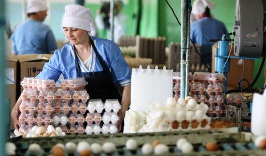 Почти на 2 рубля подорожали яйца в Удмуртии