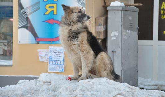 Бездомные собаки в Ижевске: что такое эвтаназия для животных и сколько это стоит?