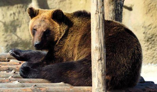 Разбившийся самолет и проснувшийся медведь: о чем утром говорят в Ижевске