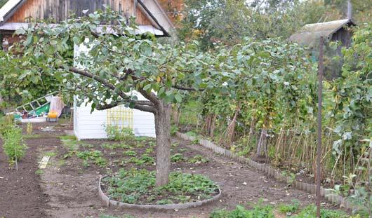 Как ижевчанам правильно провести весеннюю обрезку плодовых деревьев и кустарников на садовом участке