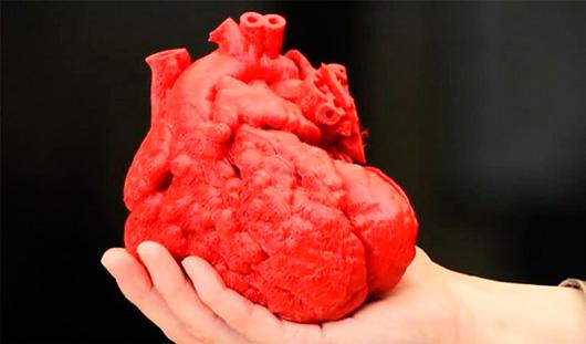 Ученые собираются печатать живое сердце на 3D-принтере