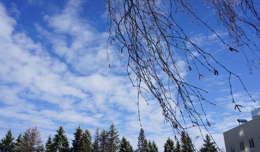 Снег и дожди продолжат идти в Ижевске в ближайшие дни