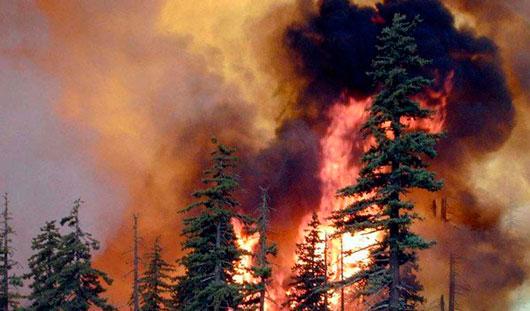 Штраф за пожар в лесу для жителей Удмуртии составит 5 тысяч рублей