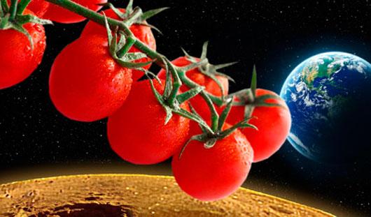 Немцы собираются выращивать томаты в невесомости