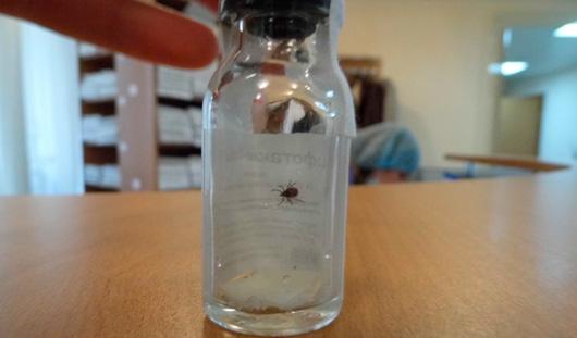 За первую неделю мая в Удмуртии зарегистрировано 720 укусов клещей