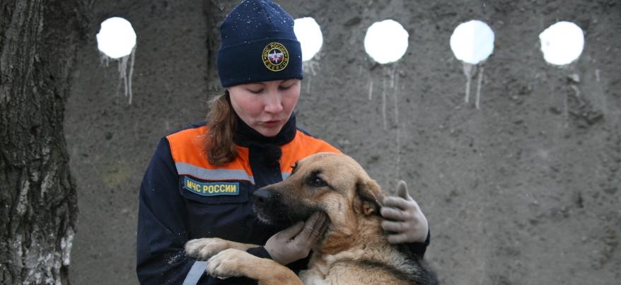 Четвероногие спасатели: как ижевские кинологи тренируют собак на поиск людей