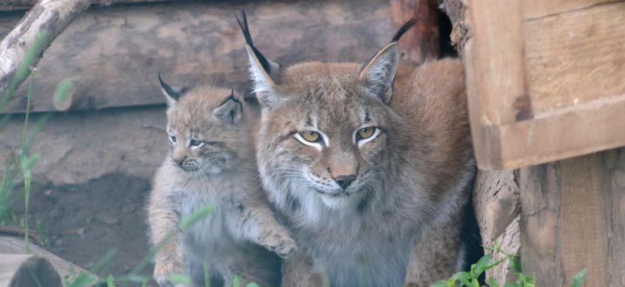 Топ-10 самых любящих и заботливых мам зоопарка Ижевска