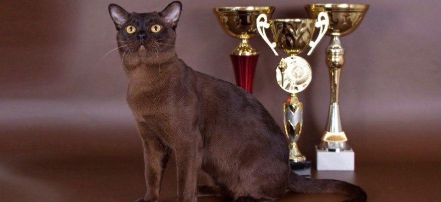 «Золотой кот Ижевска» живет в своей собственной комнате и стоит более 100 тысяч рублей