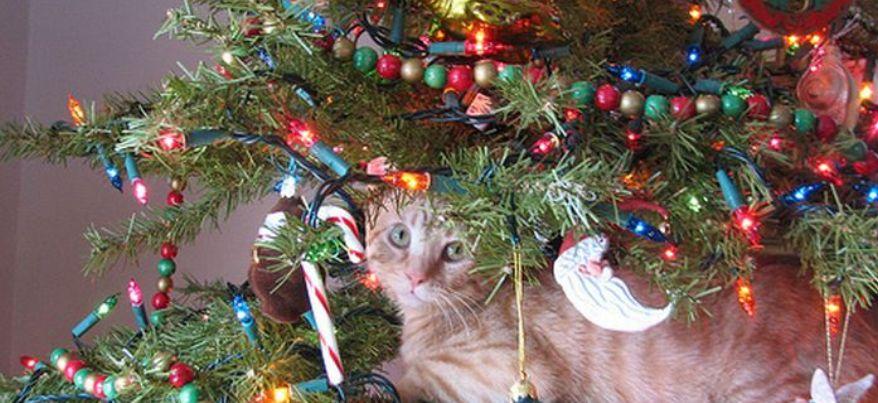 Пора убирать елку: каждый 4-й ижевчанин признался, что после Старого Нового года выбрасывает ель в окно